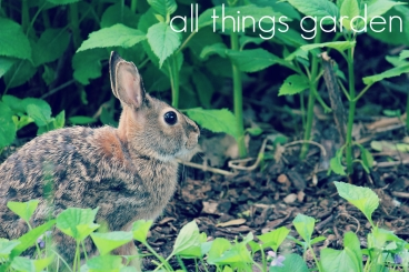 All Things Garden